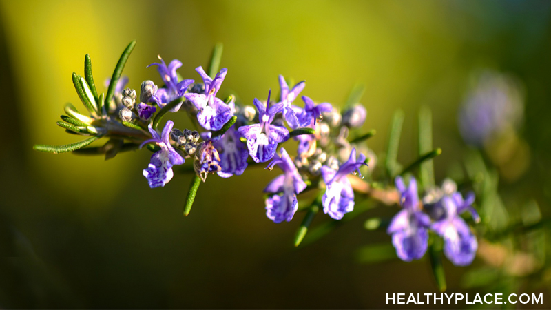 Rosemary is an herbal remedy used to improve memory, relieve muscle pain and spasm, and stimulate hair growth. Learn about the usage, dosage, side-effects of Rosemary.