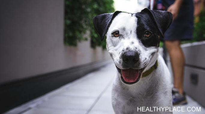There are many mental health benefits of having a dog. Find out why having a dog is a must for my mental health at HealthyPlace.